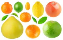 Coleção das citrinas Imagens de Stock Royalty Free