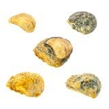 Coleção das conchas do mar em um fundo branco imagens de stock
