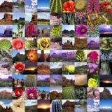 Coleção das estradas do Arizona fotografia de stock