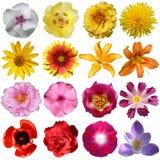 Coleção das flores Fotografia de Stock