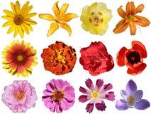 Coleção das flores imagem de stock