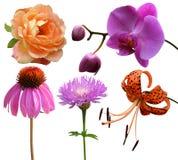 Coleção das flores foto de stock
