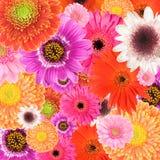 Coleção das flores Fotografia de Stock Royalty Free