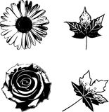 Coleção das flores e das folhas ilustração royalty free