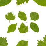 Coleção das folhas Fotografia de Stock
