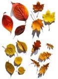 Coleção das folhas Imagem de Stock