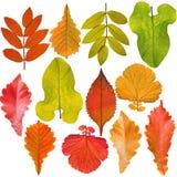 Coleção das folhas da árvore fotografia de stock royalty free