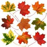 Coleção das folhas de outono Fotografia de Stock