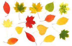 Coleção das folhas de outono coloridas bonitas Fotos de Stock