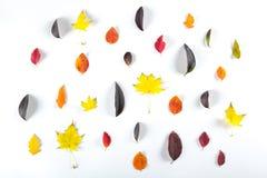 Coleção das folhas de outono coloridas bonitas isoladas no fundo branco Imagens de Stock