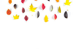 Coleção das folhas de outono coloridas bonitas isoladas no fundo branco Foto de Stock Royalty Free