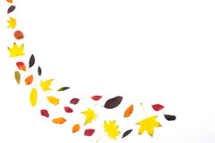 Coleção das folhas de outono coloridas bonitas isoladas no fundo branco Foto de Stock