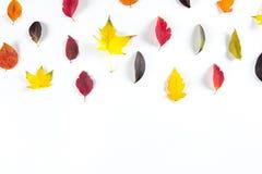 Coleção das folhas de outono coloridas bonitas isoladas no fundo branco Imagem de Stock Royalty Free
