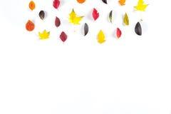 Coleção das folhas de outono coloridas bonitas isoladas no fundo branco Imagem de Stock