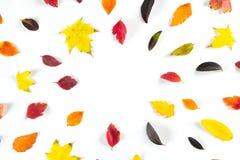 Coleção das folhas de outono coloridas bonitas isoladas no fundo branco Fotos de Stock Royalty Free