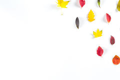 Coleção das folhas de outono coloridas bonitas isoladas no fundo branco Fotografia de Stock Royalty Free