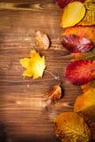 Coleção das folhas de outono no fundo de madeira Fotografia de Stock Royalty Free