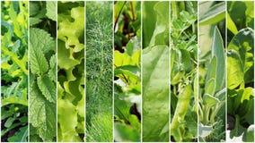 Coleção das folhas e dos vegetais do verde Fundos da mola Conceito saudável comer Fundo de jardinagem Fotos de Stock Royalty Free