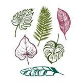 Coleção das folhas tropicais Ajuste para seu projeto Foto de Stock