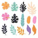 Coleção das folhas tropicais da selva Fotos de Stock Royalty Free