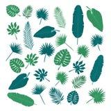 Coleção das folhas tropicais Elementos da natureza para seu projeto Imagem de Stock Royalty Free