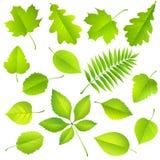 Coleção das folhas verdes ilustração stock