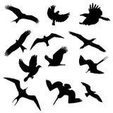 Coleção das formas dos pássaros Imagens de Stock