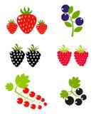 Coleção das frutas de baga Fotografia de Stock