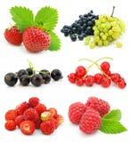 Coleção das frutas de baga maduras isoladas Imagens de Stock