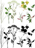 Coleção das plantas. Imagem de Stock