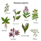 Coleção das plantas venenosas ilustração royalty free