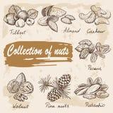 Coleção das porcas ilustração stock