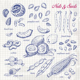 Coleção das porcas e das sementes no papel Imagem de Stock