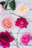 Coleção das rosas imagem de stock royalty free