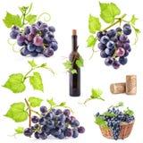 Coleção das uvas fotos de stock
