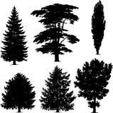 Coleção de árvores de pinho Fotografia de Stock Royalty Free