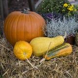 Coleção de abóboras de outono imagens de stock royalty free