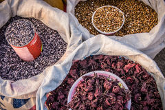 Coleção de agrícola Imagens de Stock
