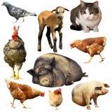 Coleção de animais domésticos imagens de stock