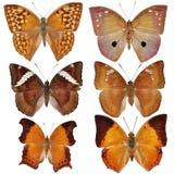 Coleção de borboletas coloridas Fotos de Stock