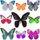 Coleção de borboletas coloridas Foto de Stock Royalty Free