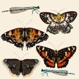 Coleção de borboletas coloridas do vetor no estilo do vintage Foto de Stock Royalty Free