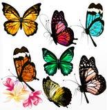 Coleção de borboletas realísticas coloridas Imagem de Stock Royalty Free