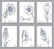 A coleção de 6 cartões com mola tirada mão floresce ilustração do vetor