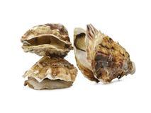 Coleção de conchas do mar diferentes da árvore, no fundo branco em cores naturais Um grupo de grandes conchas do mar imagem de stock