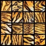 Coleção de detalhes da pele do tigre foto de stock royalty free