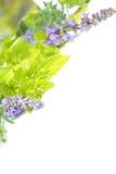 Coleção de ervas do jardim Imagens de Stock Royalty Free