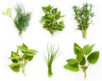 Coleção de ervas frescas Foto de Stock