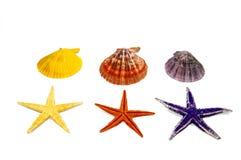 Coleção de escudos do mar Foto de Stock Royalty Free