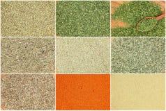 Coleção de especiarias secas das ervas Foto de Stock Royalty Free